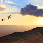 Difficult cloud migration experiences create demand for MSPs